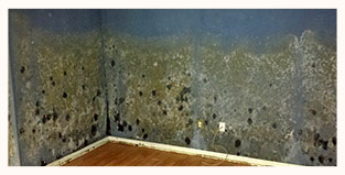 Dade City FL Mold Removal pic